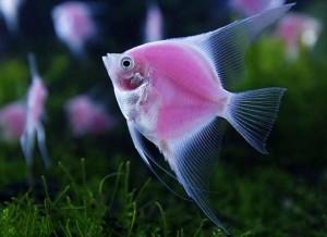 Los peces pertenecen a los tipos de animales vertebrados.