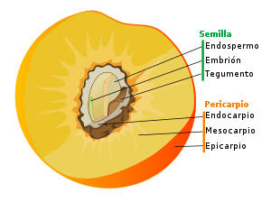 Tipos de frutas, clasificación