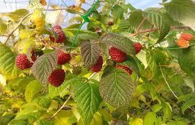 Tipos de frutas, recolección