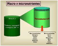 Tipos de minerales, macro y microelementos