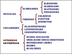 Tipos de proteínas, clasificación