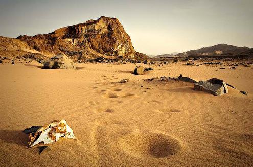 La arena de los desiertos  es los tipos de suelos que no retienen agua por lo cual es imposible para la presencia de flora.