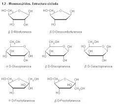 Tipos de carbohidratos, monosacáridos