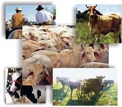 Tipos de ganadería, especies
