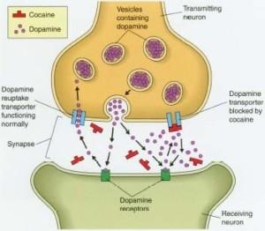 Tipos de neuronas, por neurotransmisor