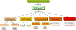 Tipos de receptores, sensoriales
