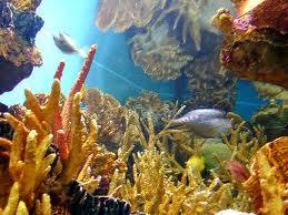 Tipos de ecosistemas, marino