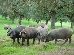 Tipo de ganadería, extensiva
