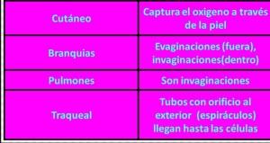 Tipos de animales, según la respiración
