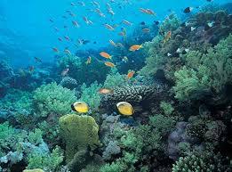 Tipos de biomas, marinos