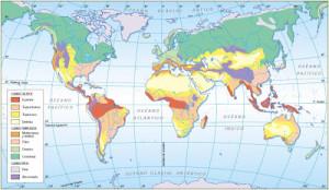 Tipos de biomas, terrestres