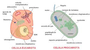 Tipos de celula, eucariotas