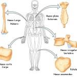 Tipos de huesos