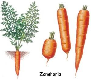 Tipos de raíces, duración