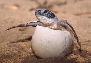 Tipos de tortugas, especies