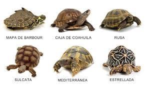 Tipos de tortugas, otras