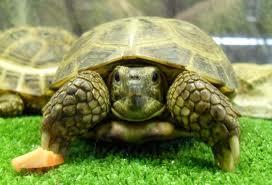 Tipos de tortugas, según su hábitat