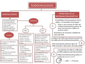 Tipos de ácidos, nucleicos