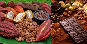 Aunque existan mucho tipos de chocolates, el origen es el mismo. Así como se aprecia del lado izquierda es como nace, dentro del fruto se encuentra las semillas del cacao que serán extraídas para procesarlas.