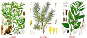 Tipos de plantas medicinales, clasificación
