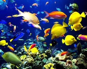 tipos de ambientes acuaticos