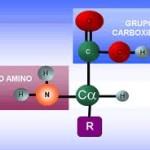 Tipos de aminoácidos