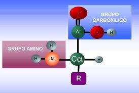 Tipos de aminoácidos, según la cadena lateral