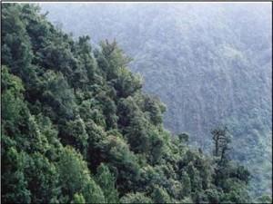 Tipos de bosques, de montaña