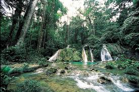 Tipos de bosques, húmedos