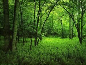 Tipos de bosques, lluviosos