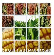 Tipos de semillas, híbridos
