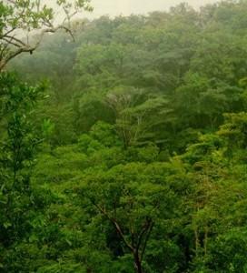 Tipos de vegetación del bosque tropical caducifolio