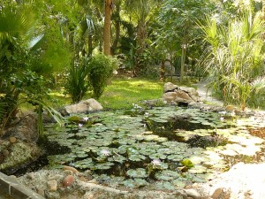 Tipos de vegetación del bosque tropical perennifolio