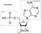 Otros tipos de ácidos