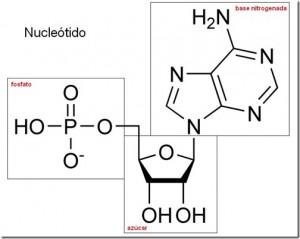 Otros tipos de ácidos nucleicos