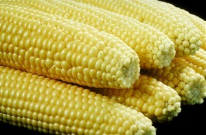 Tipos de maíz dulce