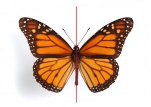 Tipos de simetría axial