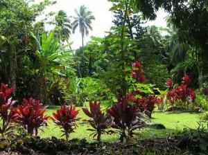 Tipos de jardines Tropical