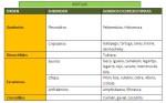 Tipos de reptiles y sus caracteristicas