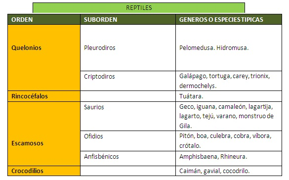 Esquema de los tipos de reptiles que la ciencia clasifica.