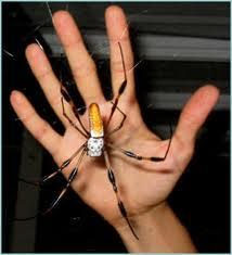 Tipos de arañas, características