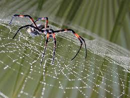 Tipos de arañas, seda