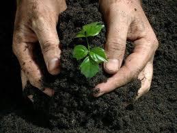 Tipos de fertilizantes, clasificación