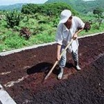 Tipos de fertilizantes