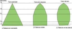 Tipos de población, pirámide