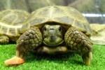 Tipos de tortugas