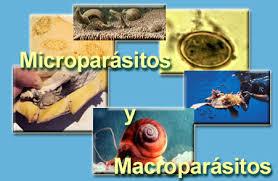 Tipos de parásitos, micro