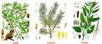 Tipos de plantas medicinales