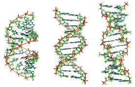 Tipos de ADN, ADN-Z