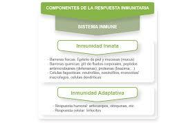 Tipos de inmunidad innata